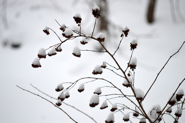Snowy Clumps