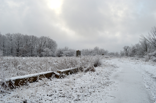 Ponds Landscape II