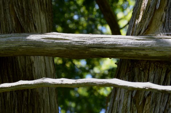 Cedar Across Cedar