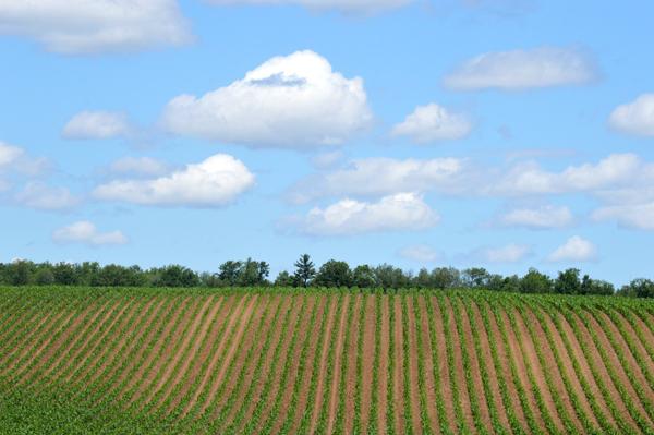 June Field