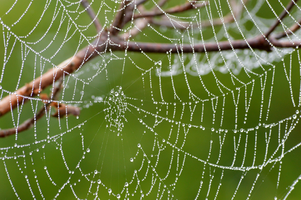 Summer Web