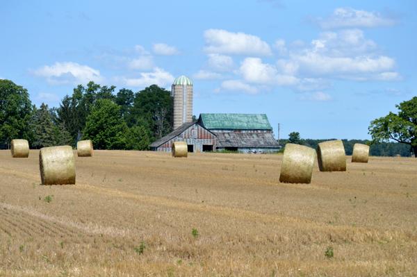 Classic Rural View