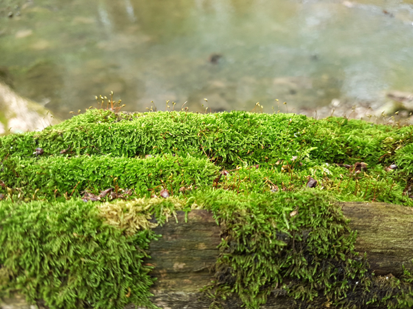Moss-Covered II