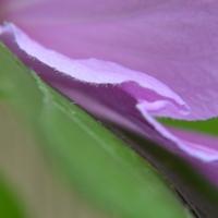 Purple Angles