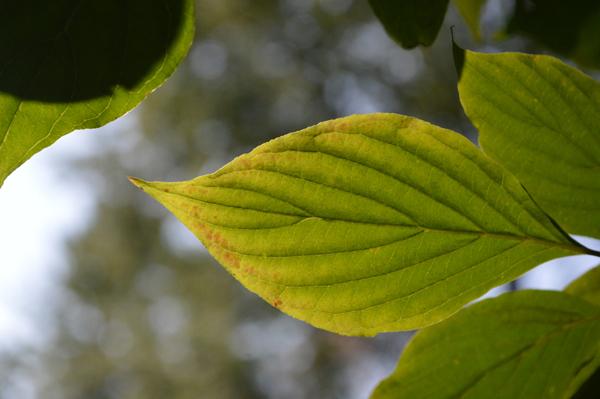 Green Veins II