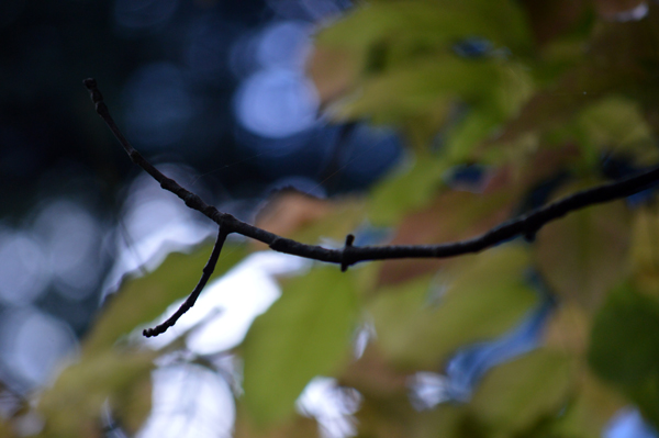 Blue Branch Abstract
