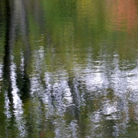 Pond Abstract III