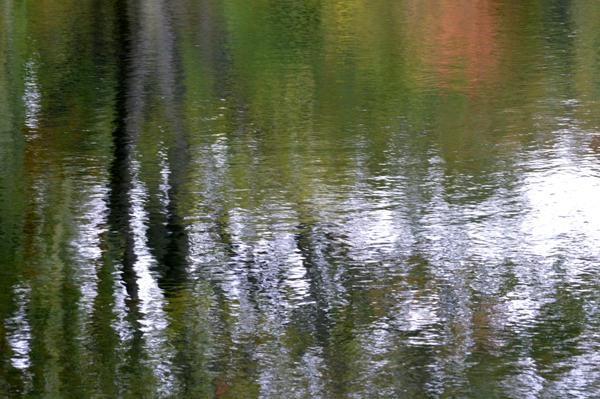 Pond Abstract III