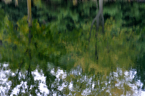Two Trees Reflected