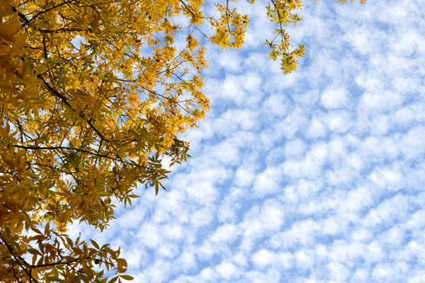 Yellow Leaves & Clouds