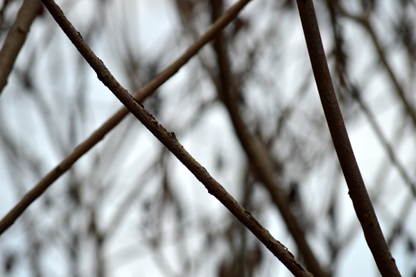 Criss Cross Branches