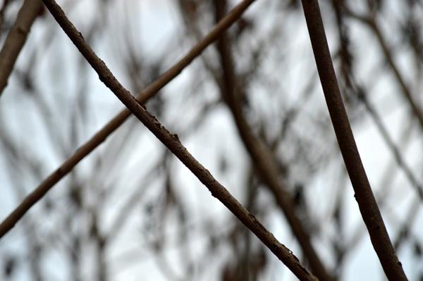 Criss Cross Branches