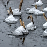 Frozen Broken Stalks