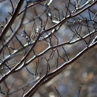 Shiny Brown Branches
