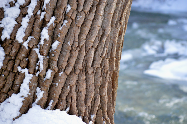 Snowy Creek Tree