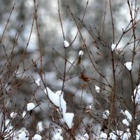 Winter Greys