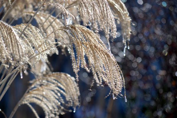Sparkly Grass