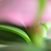 Pink Floral Abstract