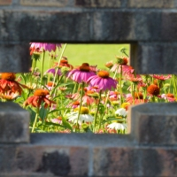 Flowers Through the Wall