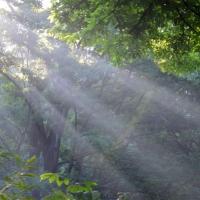 Summer Rays