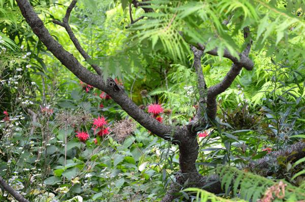 Louise's Garden 2