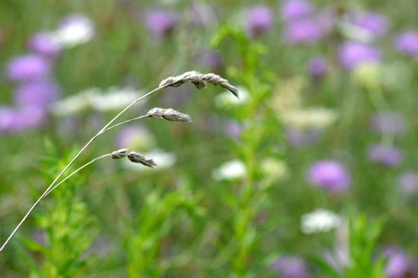 Warm Summer Grass