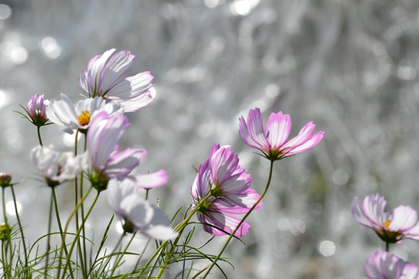 Cosmos in the Wind
