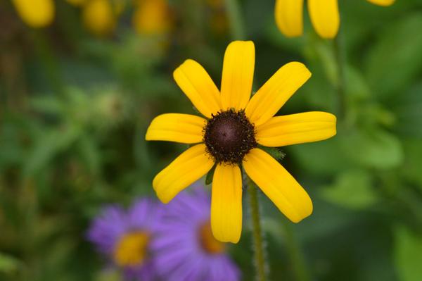 Eight Yellow Petals