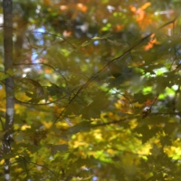 Abstract Fall Woods