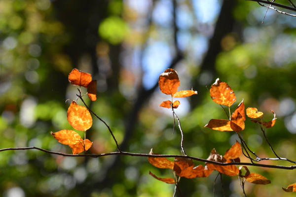 Bright Orange Branch