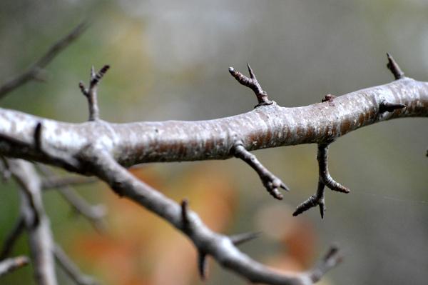 Close Branch