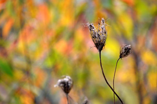 Fall Lace