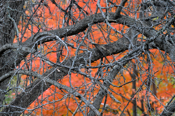 Grey Branches on Orange