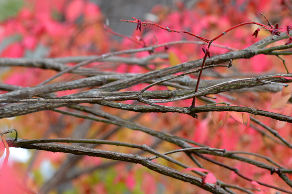 Branches on Pink