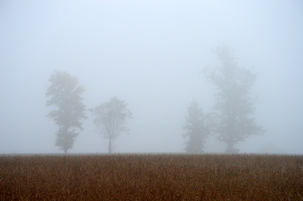 Four Trees in Fog
