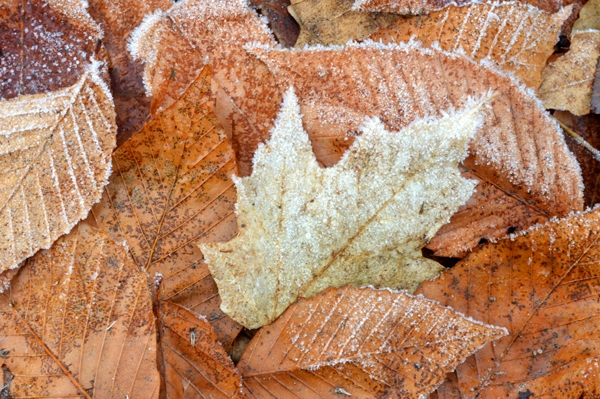 Frosty Browns