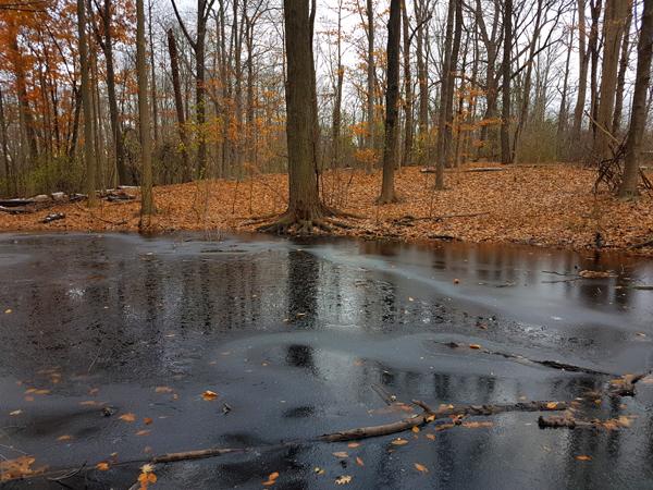 Pond Stillness