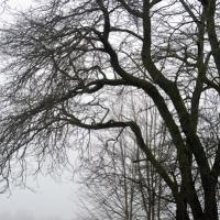 Elegant Branches 2