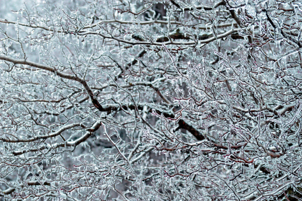 Iced Blue Abstract