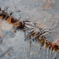 Iced Leaf Abstract