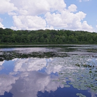 Pond Clouds