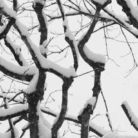 November Branches