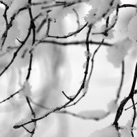 Under Snowy Branches