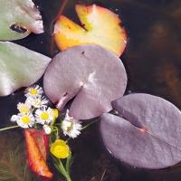 Floating Arrangement