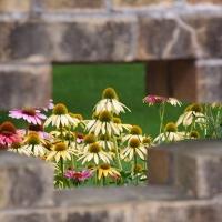 Garden Beyond the Wall