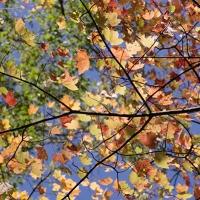 Branch Beauty