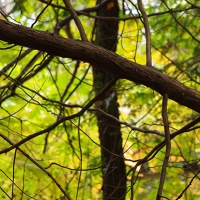 Cedar Branch 2