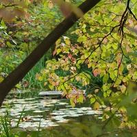 Dogwood Glade