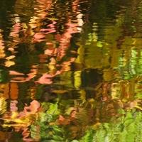 Fall Pond Colours